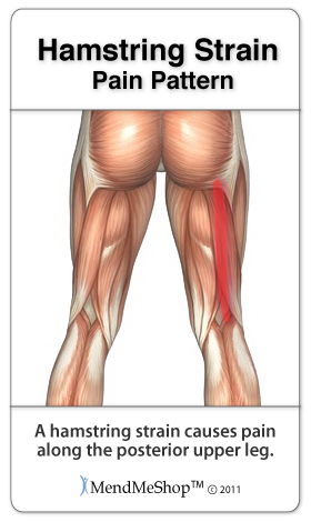 Hamstring Muscle Tissue Scar Tissue